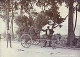 Carrying cane to market, 1880