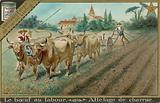 Oxen Pulling a Plough