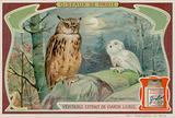 An Eagle Owl and a White Owl