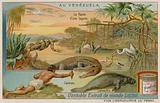 The Creatures of the Lagoon with an Alligator and a Manatee and a Mangrove Tree