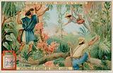 Mexicans Harvesting Vanilla Pods