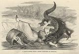 A lady's battle with a swamp alligator in Louisiana
