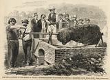 Roasting an ox near Lynn