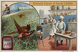 Liebig card featuring pheasants