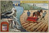 Liebig card featuring seabirds
