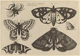 Three Moths, Two Butterflies, and a Bumble Bee