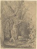 Tree and Foliage