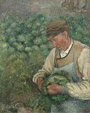 The Gardener – Old Peasant with Cabbage