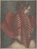 L'Ange anatomique (The Anatomical Angel) or Dissection of a Woman's Back