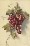 Grapes Against White Wall