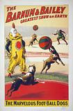 The Barnum & Bailey greatest show on earth. The marvelous foot-ball dogs