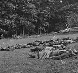 Gettysburg, Pa. Confederate dead gathered for burial at the southwestern edge of the Rose woods, July 5, 1863