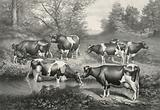 Holstein-Friesian cattle of the Brookbank herd. Iowa City, Iowa