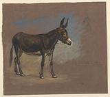 Study of a Mule