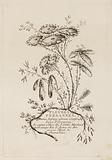 """Title Page, from """"Fleures Persannes"""""""