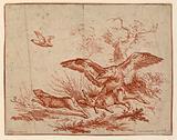 Vulture Killing a Hare