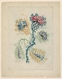 Fantastic Flower Motif from Nouvelle Suitte de Cahiers de Fleurs Idéales