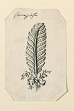 Design for a Feather Hairdress