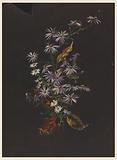 Study of an Autumn Bouquet