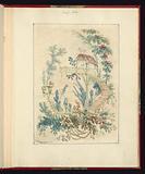 """Ornamental Design from """"Nouvelle suite de cahiers arabesques chinois a l'usage des dessinateurs et des peintres"""", No 1, Inventes et dessines par Jean Pillement"""