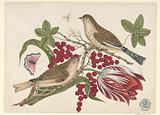 Two Brown Birds on Branch with Tulip, Berries, and Insects