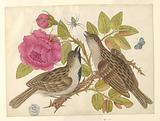 Pair of Brown Birds on Rose Stem with Butterfly and Spider