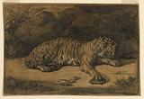 A Tiger and A Tortoise
