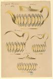 Designs for Teapot, Hot Water Pitcher, Milk Pitcher and Sugar Bowl