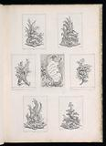 Ornament Design with Two Dead Birds lying on Acanthus Branch, from Livre de Legumes (Series of Vegetable Ornament)