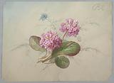 Design for Wallpaper and Textile: Flowers