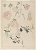 Botanical Detail Studies: Hollyhocks, Blueberries, and Blackberries
