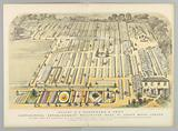Messrs. E G Henderson & Son's Horticultural Establishment, Wellington Road, St John's Wood, London.