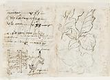 "Recto: Four preliminary design for the ""Vermis Sericus"" (Silk-making) print series. Above left: Winding silk."