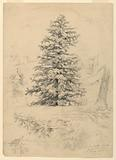 Study of a Hemlock, North Conway, New Hampshire