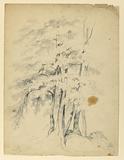 Study of Black Birches