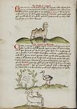 A Camel with a fly on its Back; Insects in a Vineyard and a Stork Nearby; A Ram with a Crow on its Back