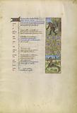 November calendar page; Gathering Acorns for Pigs; Sagittarius