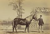 Fine, Poney Finlandais, Ecuries russes de l'Exposition Universelle 1867