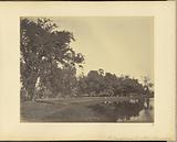 General view of Banian Tree and Lake – Barrackpore