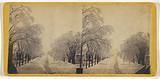 Elm Street, Winter, Potsdam, NY