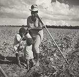 Black woman Giving Her Children a Drink in the Field Where She's Hoeing Cotton on an FSA Cooperative Project (Allen …)
