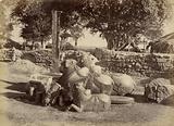 Sacred Bulls in Warungal Fort