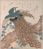 Peacock on Pine Tree and Peonies, from the series Three Sheets