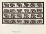 Animal Locomotion. An Electro-Photographic Investigation of Consecutive Phases of Animal Movements.