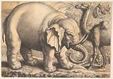 Elephant and Camel (reverse copy)