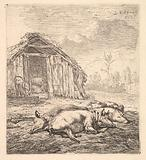 Three pigs lying on their sides, a pigsty and trough beyond