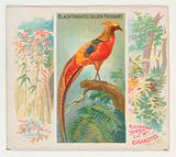 Black-Throated Golden Pheasant, from Birds of the Tropics series for Allen & Ginter Cigarettes