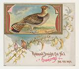 Pheasant, from the Game Birds series for Allen & Ginter Cigarettes