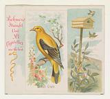 Golden Oriole, from the Song Birds of the World series for Allen & Ginter Cigarettes