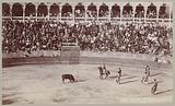 Scene at a bull fight